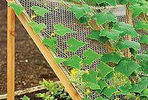 Odling och trädgård