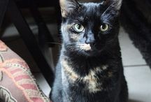 Cats of Pinterest / Cats. Lots and lots of cats.