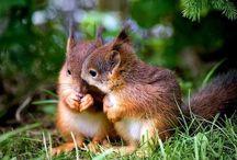 Squirrels - Petits écureuils
