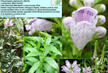 plant id sites