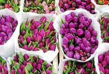 fleurs. / by Gabby