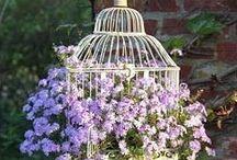 Cage et fleurs