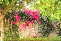 """Il Giardino del B&B Juliae Felicis / La passione dei gestori del B&B JF di Pompei per il verde e la """"green culture"""" è smisurata, la costante cura dei 2 centenari alberi di limoni (tipologia limoni della costiera Amalfitana), la cratività di arredare ogni giorno il giardino con elementi decorativi in ceramica e vetro, la conoscenza e la scelta dei fiori di stagione in base alle cromie e alla loro esposizione al sole , ecc"""