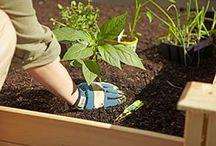 Garden y Plants