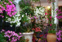 Nyári kert / Nyári kert, garden, flowers, nyári kerti virágok, kertészeti ötletek, tippek