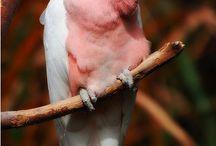 世界の鳥たち / 自然界の造形学と色の配色の素晴らしさ