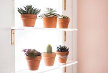 Plant windows