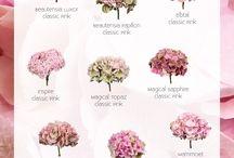Zahrady kvety