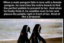 Penguins Penguins Penguins!!!