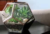 Crafts ~Terrariums / by Shannon from Coping Via Creativity