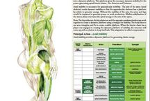 Catene muscolari