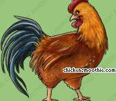 høner som er på nettstallen / k