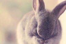 Bunny love / by Stephanie Sheak