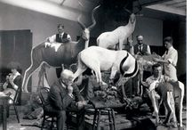 Taxidermy from the past