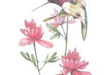 Morelowe ptaki