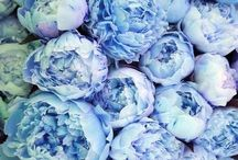 COLORS_Periwinkle, Hyacinth Purple, indigo