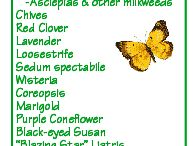 Insect attracting plants / Butterfly, ladybug attracting plants etc