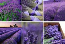 Purple! / Rich color from the rainbow