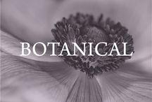 botanical / Flora & botanical beauty / by Left on Houston