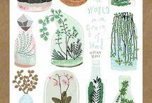 Jars and terrarium illustrations