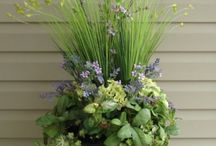 Container garden ideas.