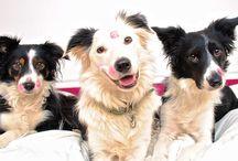 vakre og søte hunder