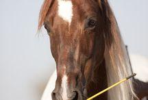 Horses / by Christine Butzlaff