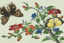 Visualizing a Culture for Strangers, Chinese Export Paintings / Produced in trading posts for sale to Western customers, these collectible works were imported to Europe and later America in great quantities, illustrating the visual world of China desired by Westerners. Public and private life from urban and rural China is represented through scenes of trade, production, and agriculture. Included are images of flora and fauna; punishments and execution; festivals and religious activities; and, portraits of royalty and the general population.