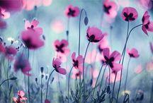 """❁ ~ i ♥  Flowers ~ ❁ / """"Если у тебя два хлеба, то продай один, чтобы купить цветы, ибо хлеб есть питание для тела, а цветы - для ДУШИ."""""""