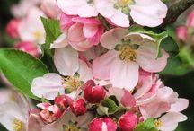 Flores vivas / Naturaleza