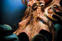 octopous