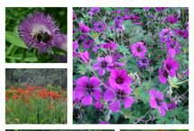 Slug & Snail free plants / Flowers for your garden which the slugs and snails will not eat.  Slug and snail resistant plants