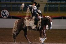 Freestyle reining idea