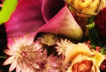 ルポポラスの花