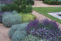 Helena garden