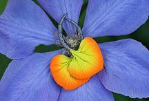 Flower Dais