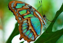WHISPERING WINGS / Butterflies, one of my Favorite Things and all the things I love about them