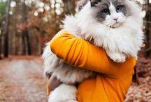 ♡cats♡