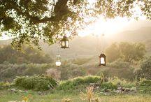 Beautiful Surprises / by Michaela Harlow / The Gardener's Eden