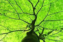 trees / by Lisa Schmaltz