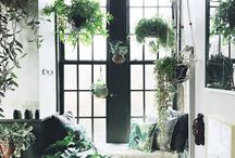 Plant Decor / Green Spaces / A place for plant-filled homes and workspaces.