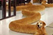 Snip Snap Doggo Snipsnapdoggos On Pinterest