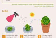 Faire repousser restes de légumes