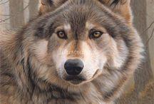 lupi e cani