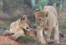 Favorite Animal Pics / by Debra Brown