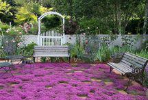 Ground cover / Gardening