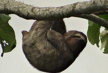 Sloth, Moth, Algae
