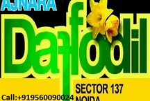 Ajnara Daffodil / Ajnara Daffodil is the new residential project of Ajnara Builder at sector 137 Noida. Ajnara Daffodil Noida is offering 2/3 bhk flats with super luxurious features.