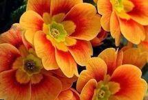 Refki kwiaty