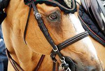 Mes chevaux préférer